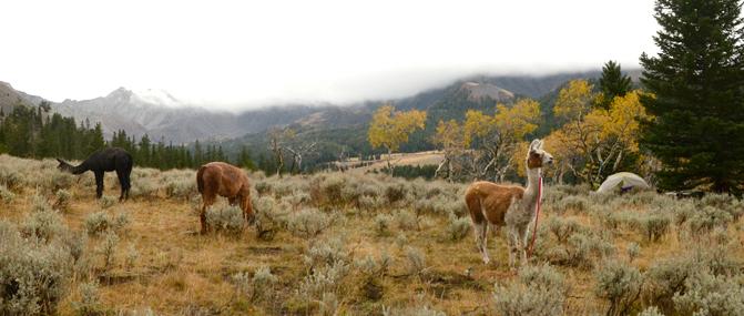 Montana Elk Hunting Camp   Montana Llama Guides