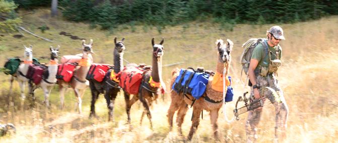 Hunt with llamas   Montana Llama Guides