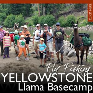 Llama Backpacking Treks | Yellowstone National Park